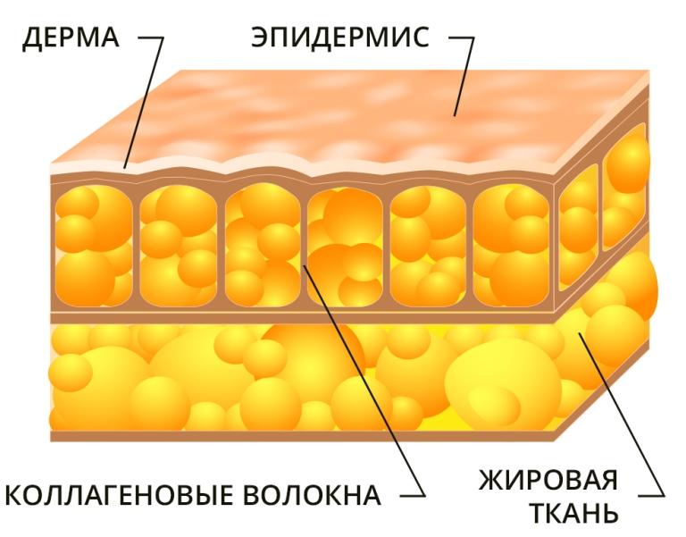 ультразвуковая липосакция, ультразвуковая липосакция отзывы, ультразвуковая липосакция живота, ультразвуковая липосакция цена, ультразвуковая липосакция кавитация, ультразвуковая липосакция живота отзывы, аппарат ультразвуковой липосакции, ультразвуковая липосакция живота цена, ультразвуковая липосакция москва, ультразвуковая липосакция подбородка, ультразвуковая липосакция фото, кавитация ультразвуковая липосакция отзывы, ультразвуковая липосакция до после, ультразвуковая липосакция отзывы фото, ультразвуковая липосакция отзывы цена, ультразвуковая липосакция живота цена отзывы, ультразвуковая липосакция фото до и после, лазерная ультразвуковая липосакция, ультразвуковую безоперационную липосакцию, ультразвуковая липосакция отзывы форум, ультразвуковая липосакция лица, ультразвуковая липосакция купить аппарат, ультразвуковая липосакция стоимость, ультразвуковая липосакция ulfit, ультразвуковая липосакция подбородка отзывы, ультразвуковая липосакция москва цены